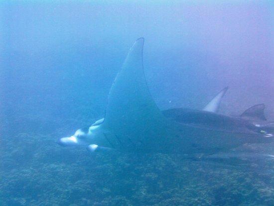 TOPDIVE Bora Bora: Manta Ray