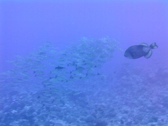 TOPDIVE Bora Bora: Trigger fish cone