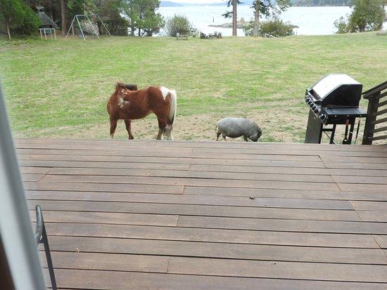 Bilde fra Pebble Cove Farm