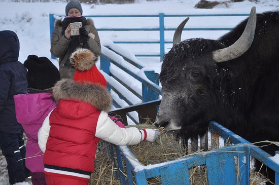Gorki, Ρωσία: Тибетский як