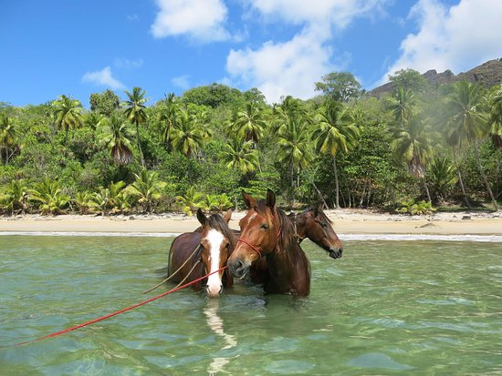 Nuku Hiva, Ranskan Polynesia: baignade avec les chevaux, plage de Anaho