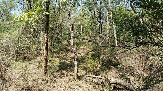 Chinnar Wildlife Sanctuary: Sanctuary landscape