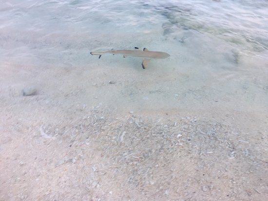 Navini Island, Fiji: photo1.jpg