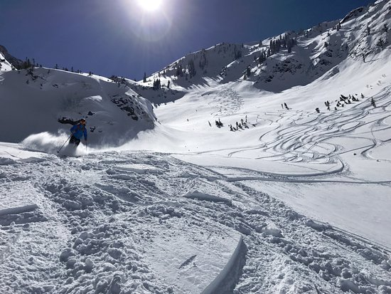 Alta, UT: just a little pow low