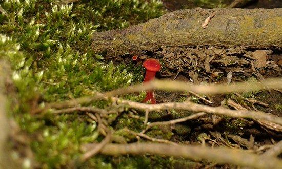 Reserva Forestal Grecia Sector Bosque del Nino