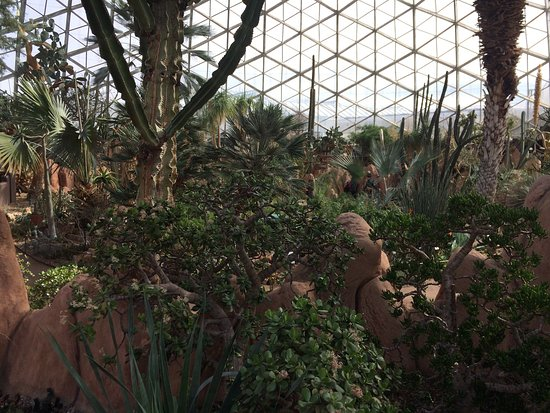 Mitchell Park Horticultural Conservatory (The Domes): photo9.jpg