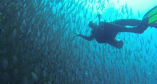 Osa Peninsula, Costa Rica: Banc de poissons!