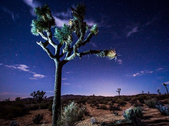California Desert, Californië: Joshua Tree at night