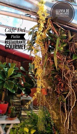Grecia, Costa Rica: Las lluvias de Oro: llamadas así porque destellan una gran cantidad de pequeñas florecitas amari