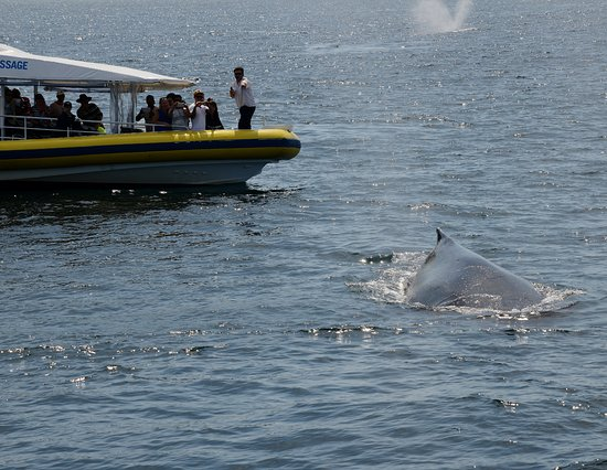 Huskisson, Australia: Humpack Whales in Jervis Bay Sth Coast NSW