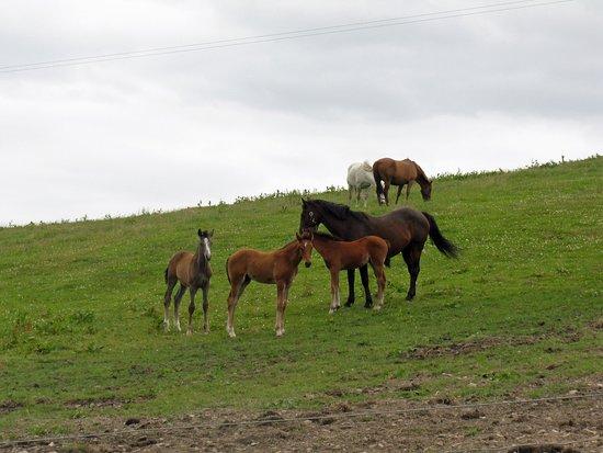 Moonshine Lodge Equestrian Centre: Beautiful Horses in Ireland