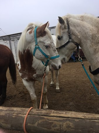Laurel, IN: A pair of the Salt Creek Ranch's horses (I rode the one on the right.)