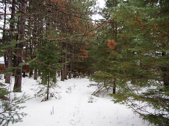 Embarrass, MN: beautiful forest on the property