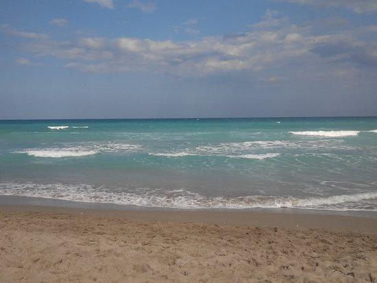 Jensen Beach, FL: 20170219_150348_large.jpg