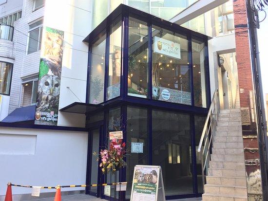 Owl's Garden Harajuku