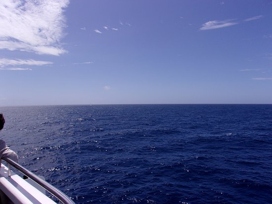 Star of Honolulu - Dinner and Whale Watch Cruises: No whales here either
