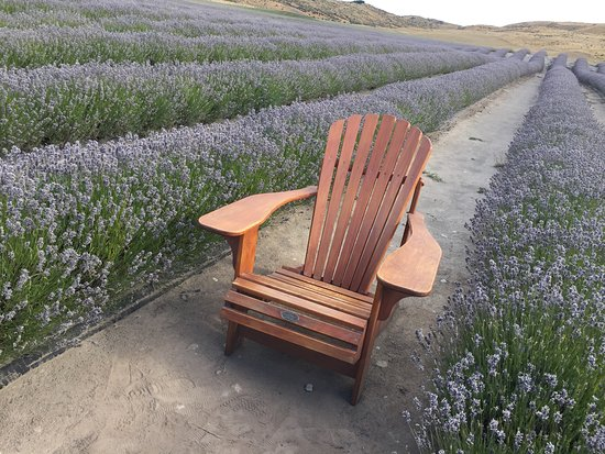 Mackenzie District, New Zealand: Chair in a great spot for photo shoot