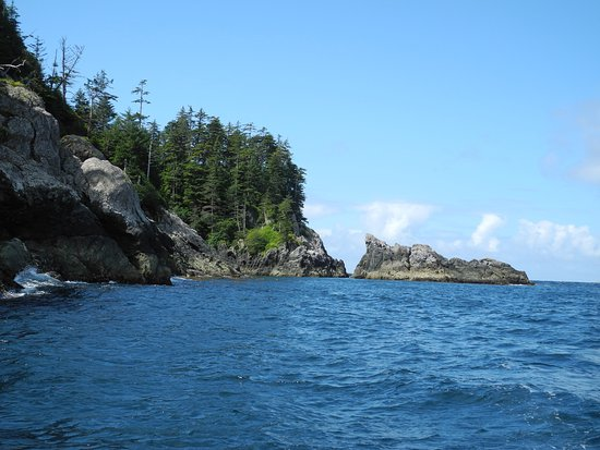 Haida Gwaii (Queen Charlotte Islands), Canada: King and coho salmon love this area to feed in. Lots of eagles here too.