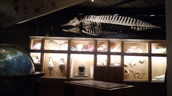 Cabinet Curiosities - Picture of The Houston Museum of Natural ...