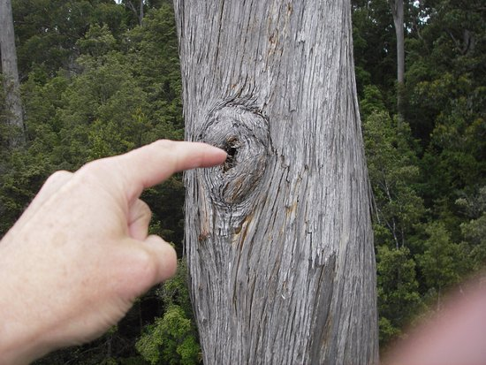 Tahune Forest AirWalk: Touch and feel