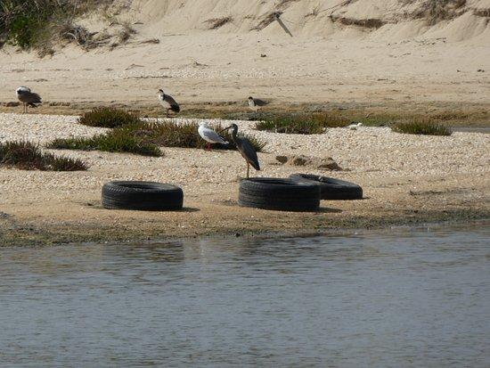 Bridport, Australia: little dam area with birds