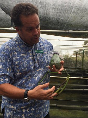 Paauilo, HI: This is Jim talking about the process of growing the orchids that produce the vanilla bean.