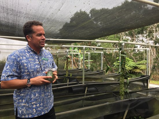 Paauilo, HI: Jim in the shade house discussing the process of growing the orchids that produce the vanilla be