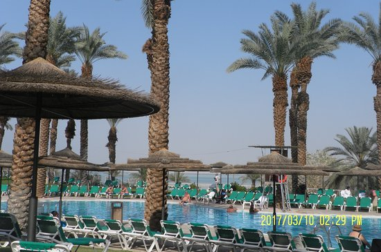 Pool - Picture of David Dead Sea Resort & Spa, Ein Bokek - Tripadvisor