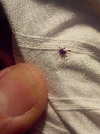 Rodamón Barcelona Hostel: La tique que j'avais pris pour une araignée