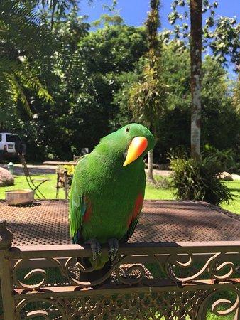 Diwan, Австралия: photo0.jpg