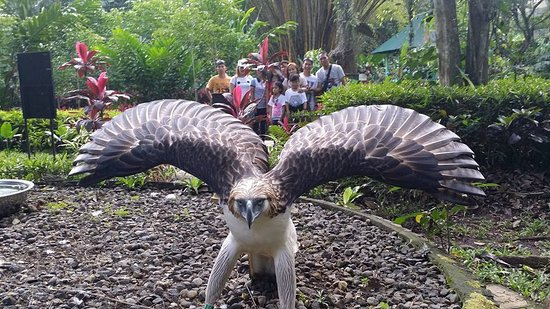 Davao City, Philippines: guest from davao at philippine eagle center
