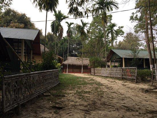 Nature Hunt Eco Camp, Kaziranga: photo1.jpg