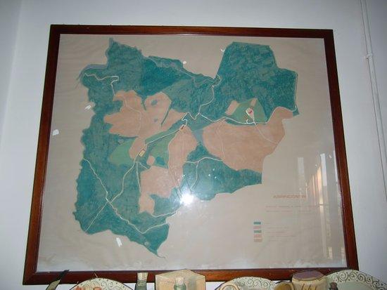 Monte Castello di Vibio, Włochy: Territorio dell'azienda di oltre 160 ettari