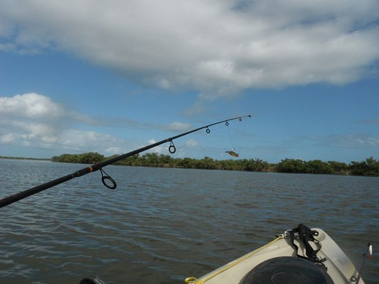 Oak Hill, FL: Trout fishing in Mosquito Lagoon across from River Breeze Park. Water is about 2' deep.