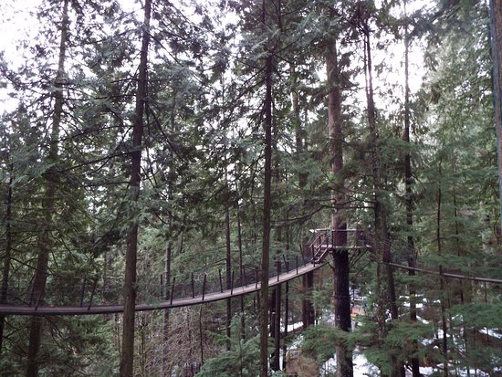 North Vancouver, Canadá: Walkway in the trees