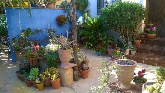 Patio fotograf a de jardin botanico la almunya del sur for Jardin botanico almeria