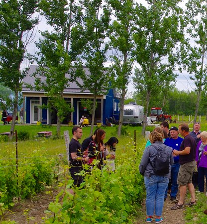 Hillier, Canada : Touring the vineyard in early spring