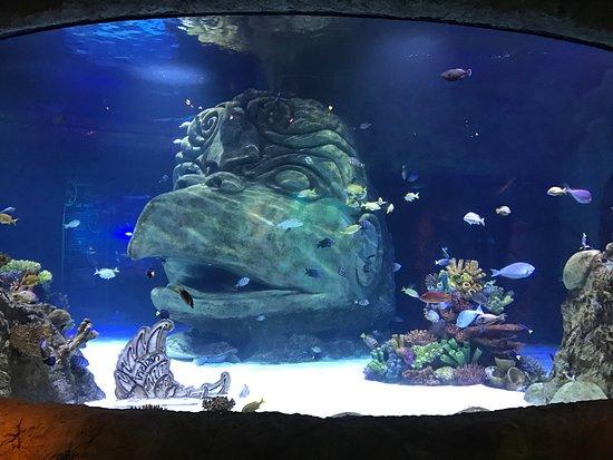 Aquarium stores in orlando - Puerto rican food san rafael