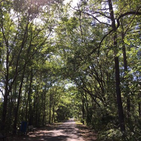 Jacksonville-Baldwin Rail Trail : photo0.jpg
