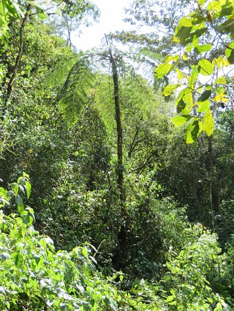 Chirripo National Park, Costa Rica: Strange fern tree, like jurassic park.