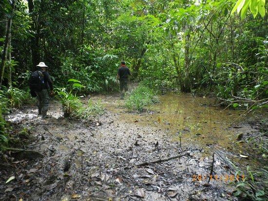 Kinabatangan Jungle Camp: Lerigt -lerigt under djungelvandringen.
