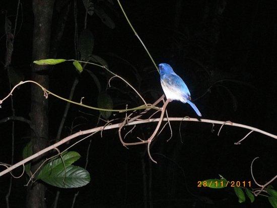 Bilit, Malaysia: Nattvandring med ficklampa i djungeln.