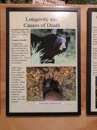 Ely, MN: some displays are interactive, and some are posted information and facts
