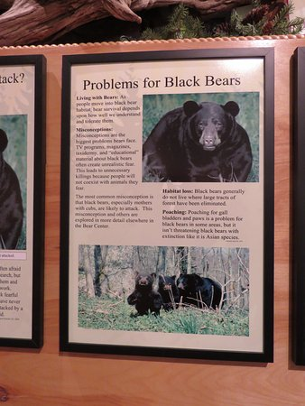Ely, MN: WE are the biggest problem for bears