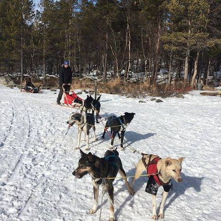 Geilo, Norwegia: Hundespannet