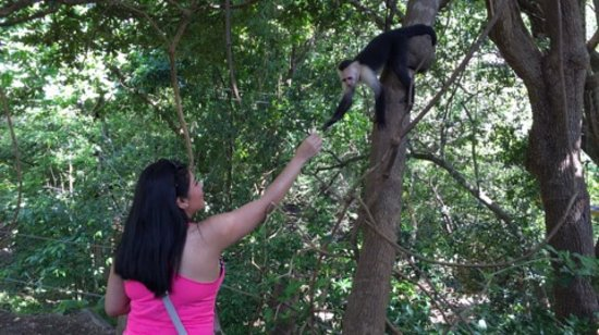 Artola, كوستاريكا: IMG_44981_large.jpg
