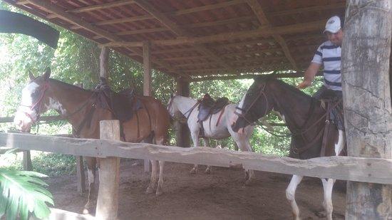Artola, Κόστα Ρίκα: 20160712_100601_large.jpg