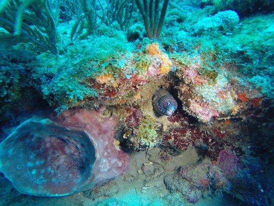 Jupiter Scuba Diving: Spotted eel