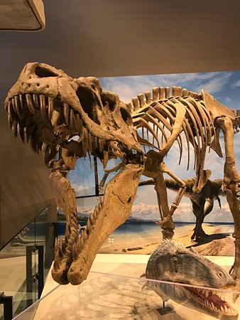 Natural History Museum of Utah: photo0.jpg