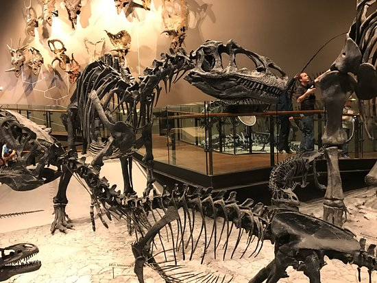 Natural History Museum of Utah: photo1.jpg